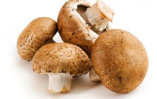 mushrooms.2